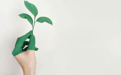 Nachhaltiges Marketing – Verantwortung tragen und deine Zielgruppe erreichen